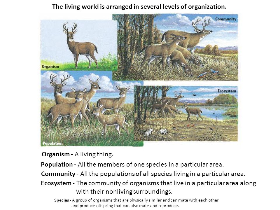 The living world is arranged in several levels of organization.