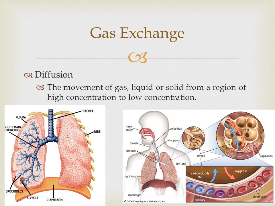 Gas Exchange Diffusion