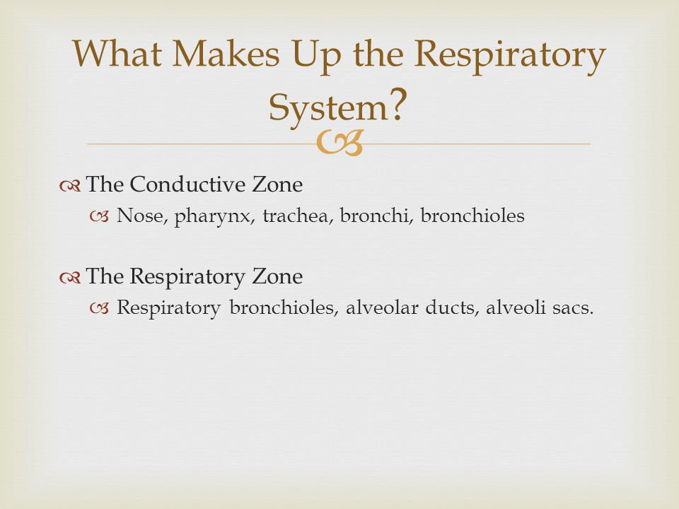 What Makes Up the Respiratory System