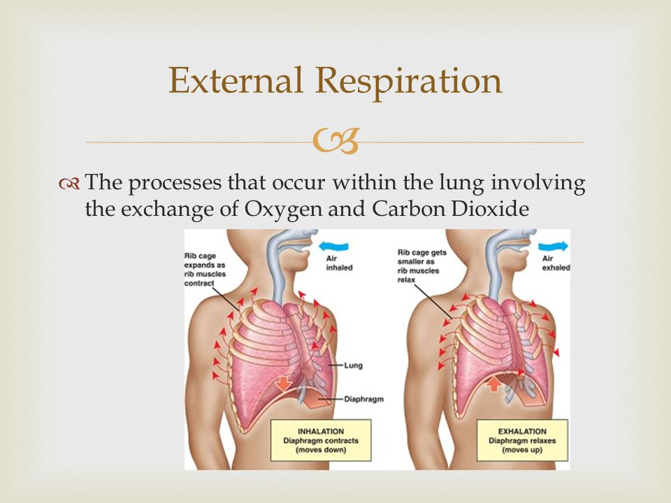 External Respiration The processes that occur within the lung involving the exchange of Oxygen and Carbon Dioxide.