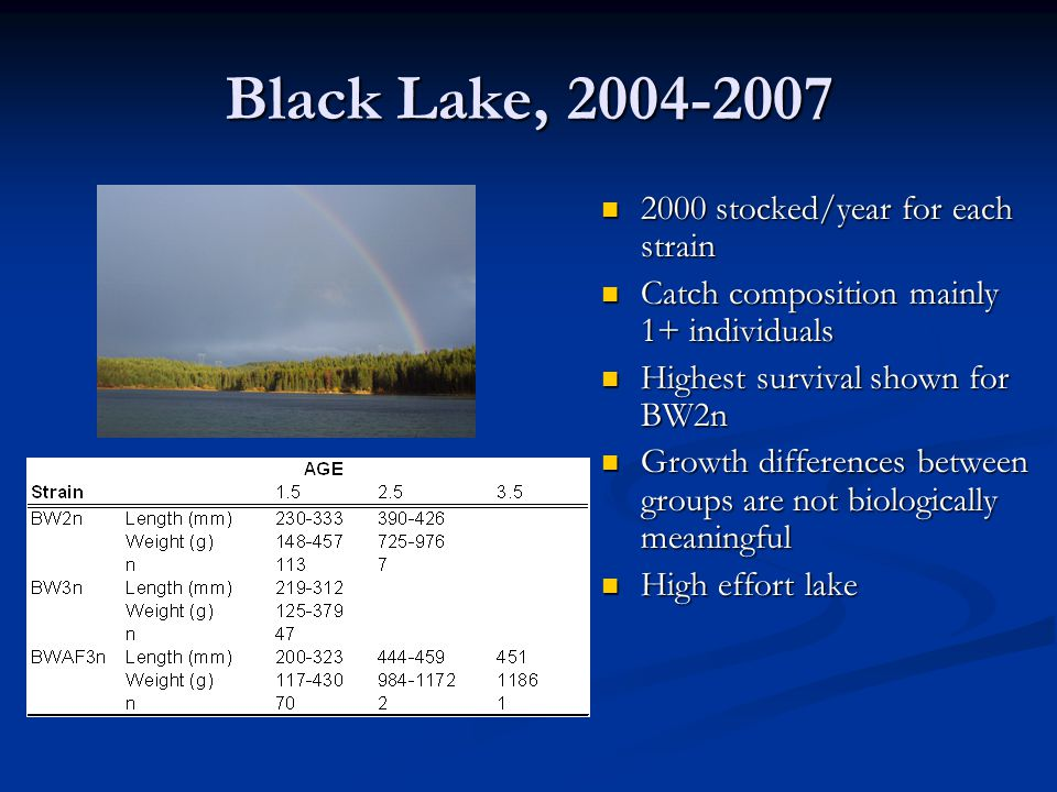 Black Lake, 2004-2007 2000 stocked/year for each strain