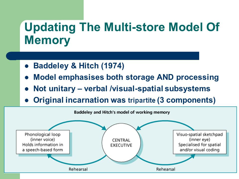 Updating The Multi-store Model Of Memory