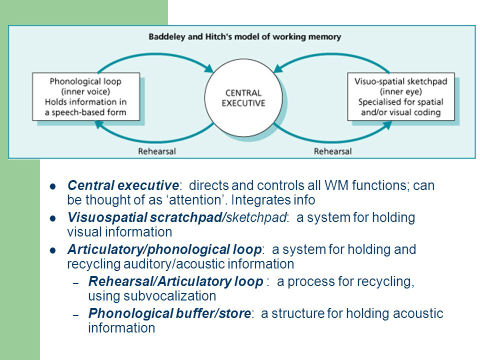 Working Memory Central executive: directs and controls all WM functions; can be thought of as 'attention'. Integrates info.