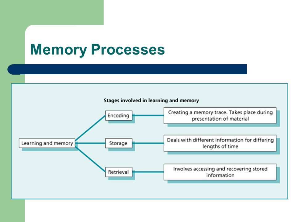 Memory Processes Process - Activities taking place within memory. Encoding. Converting information into a form suitable for use in memory.