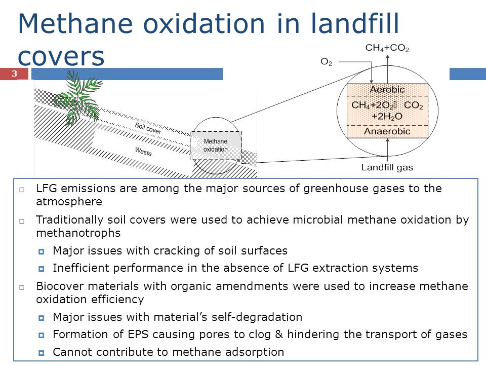 Methane oxidation in landfill covers
