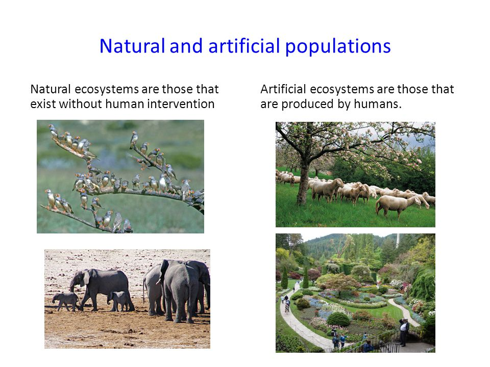 Natural and artificial populations