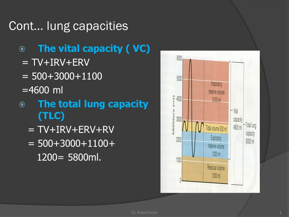 Cont… lung capacities The vital capacity ( VC) = TV+IRV+ERV
