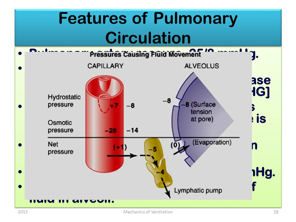 Features of Pulmonary Circulation