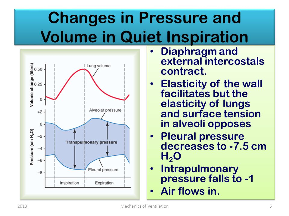 Changes in Pressure and Volume in Quiet Inspiration