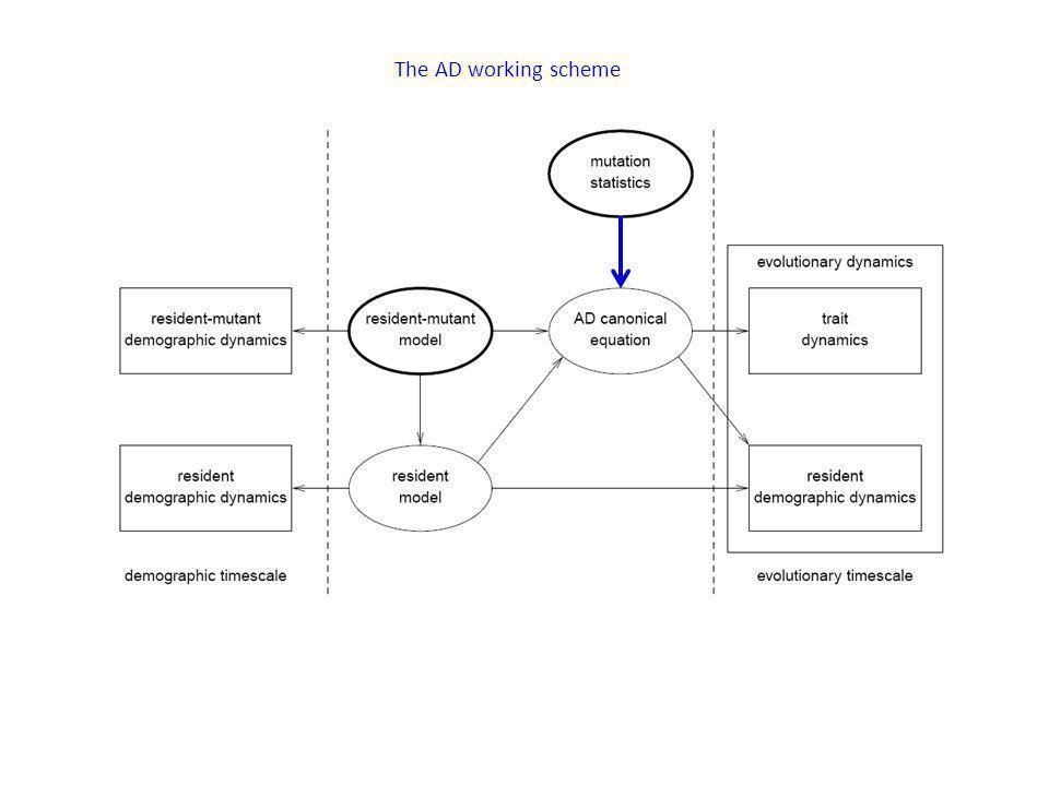 The AD working scheme
