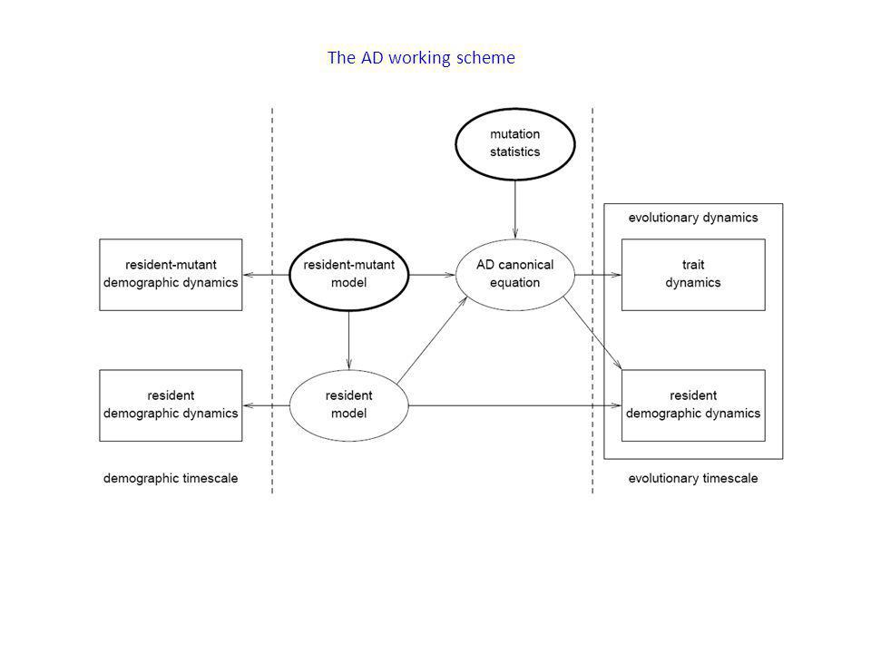 The AD working scheme - This is a picture from the book which shows the working scheme of AD.