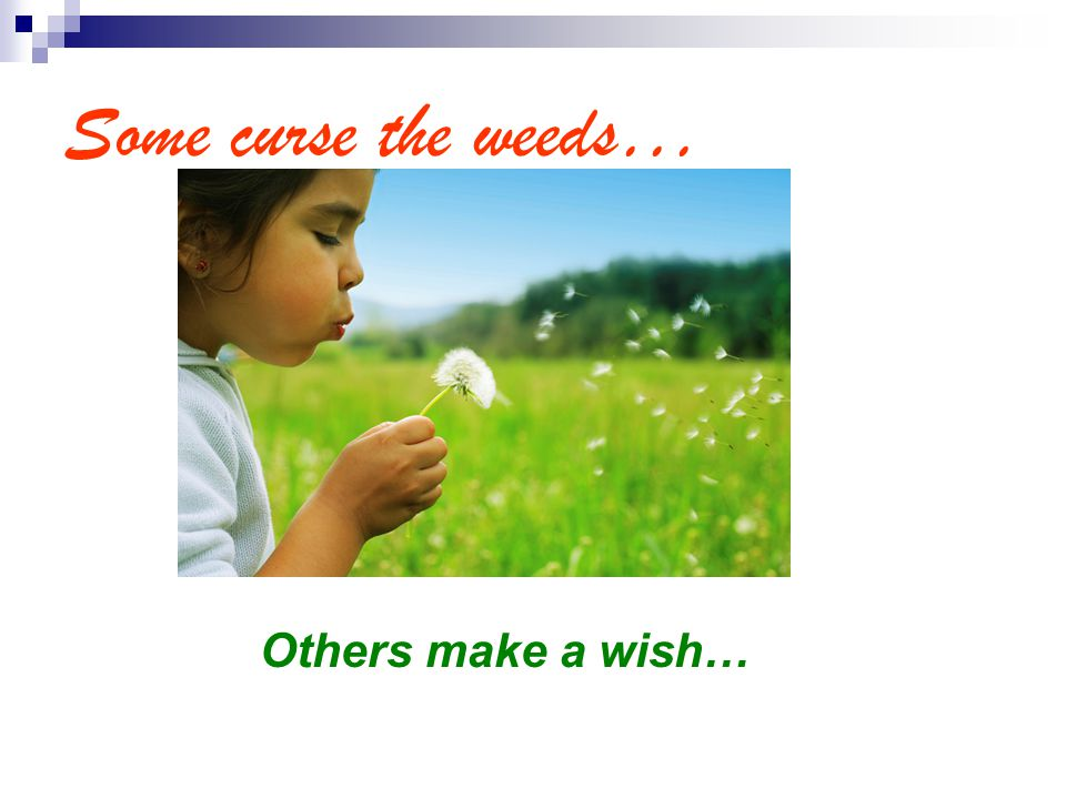 Some curse the weeds… Others make a wish…