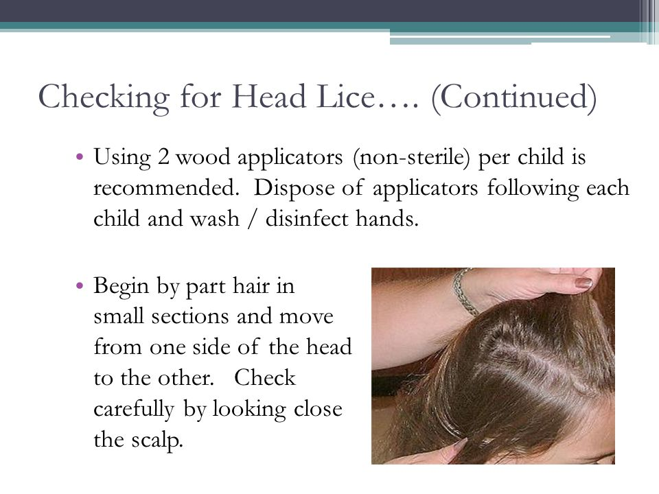 Checking for Head Lice…. (Continued)