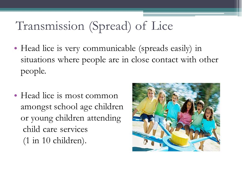 Transmission (Spread) of Lice