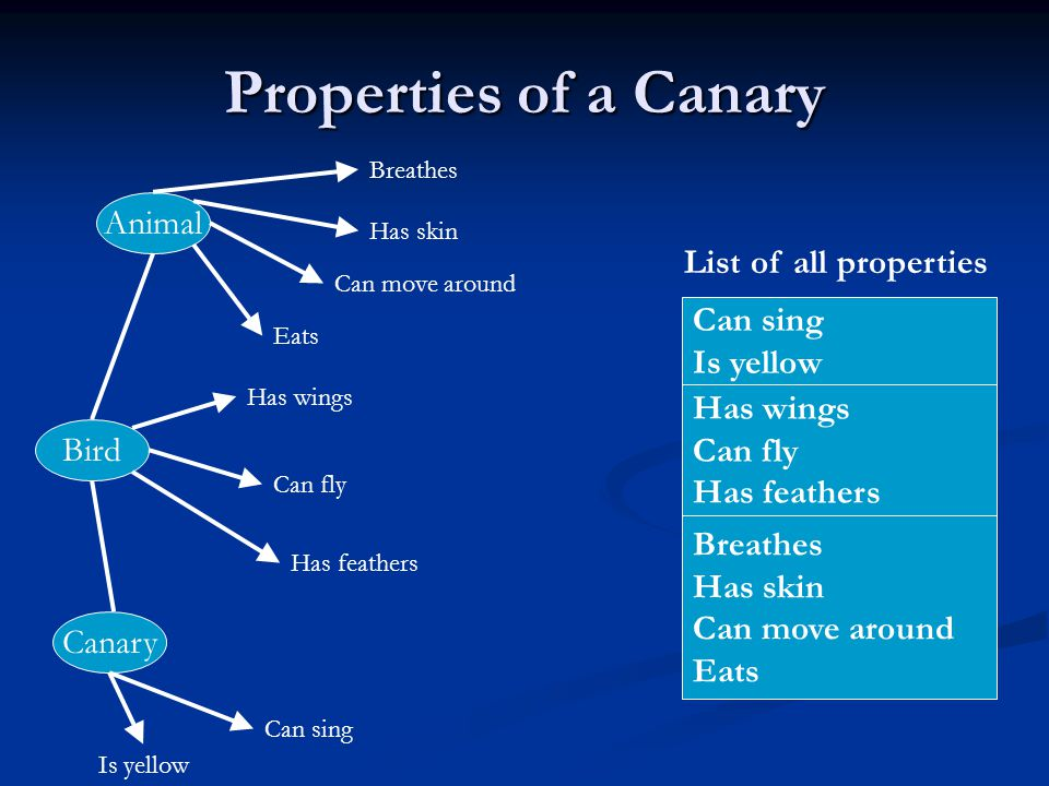 Properties of a Canary Animal List of all properties Can sing