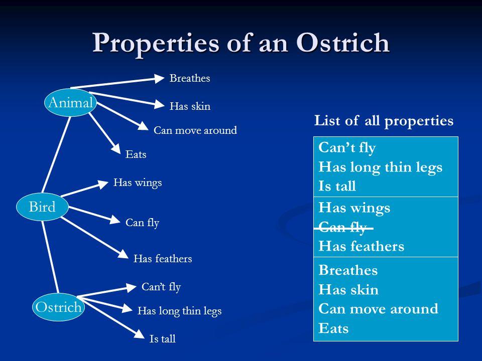 Properties of an Ostrich