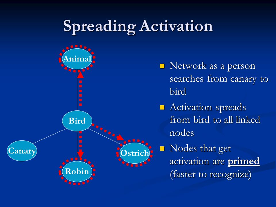 Spreading Activation Network as a person searches from canary to bird