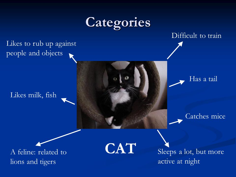 CAT Categories Difficult to train Likes to rub up against