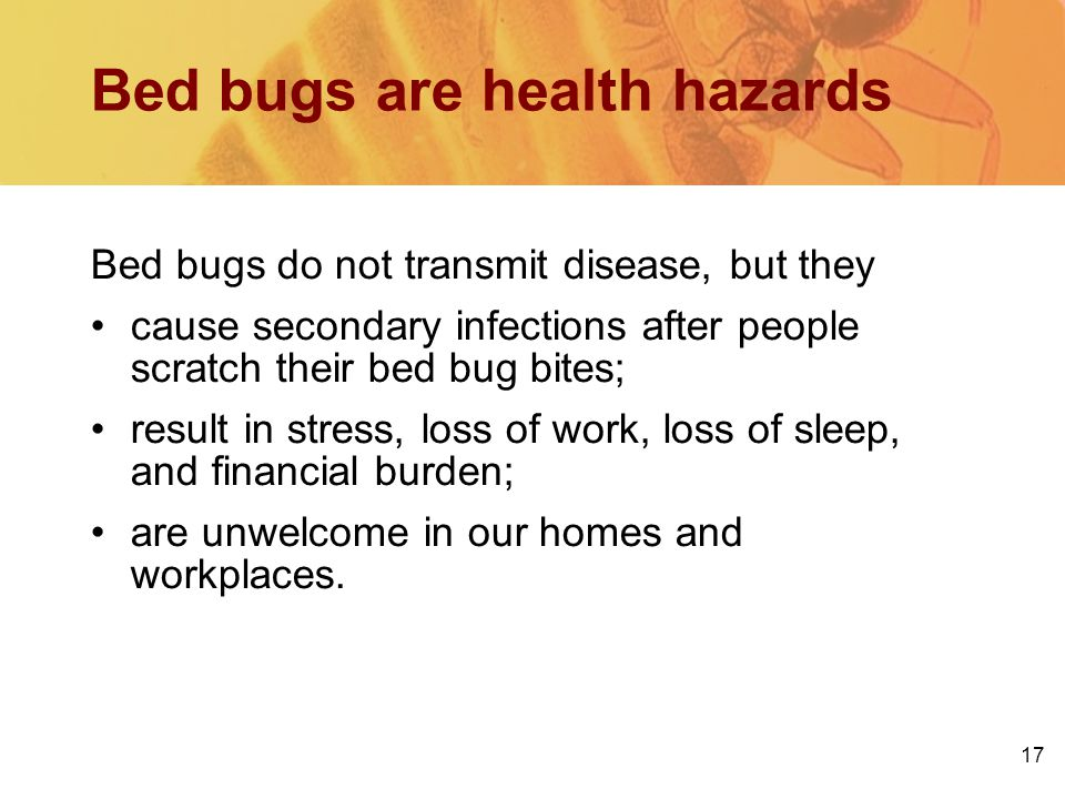 Bed bugs are health hazards