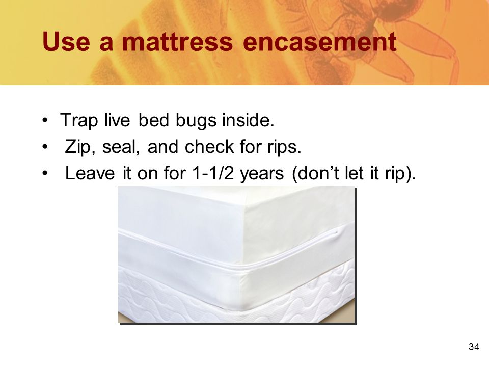 Use a mattress encasement