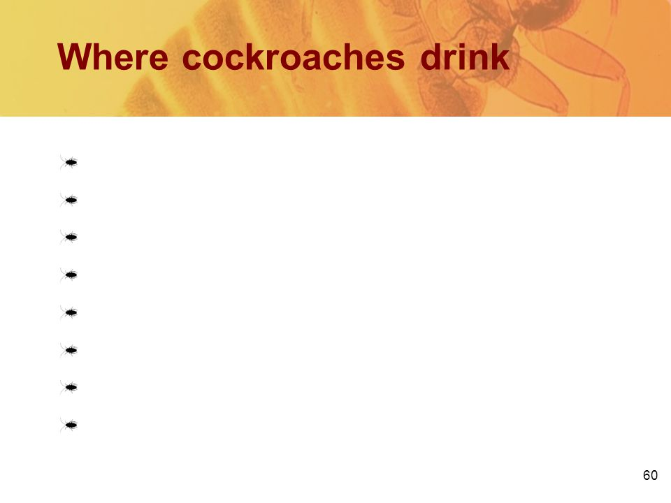 Where cockroaches drink
