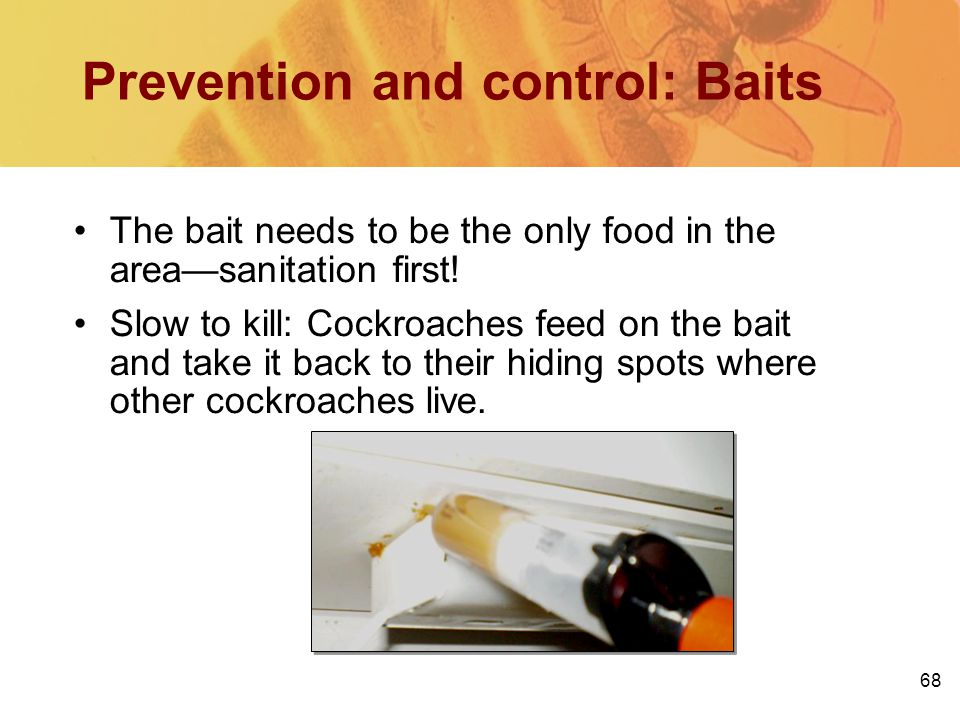 Prevention and control: Baits