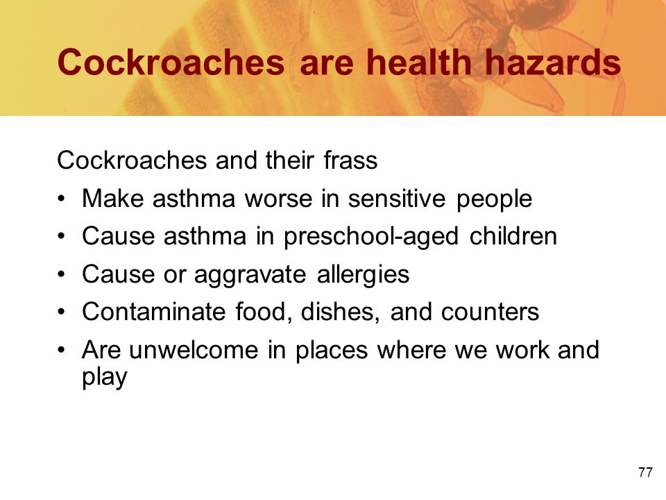 Cockroaches are health hazards