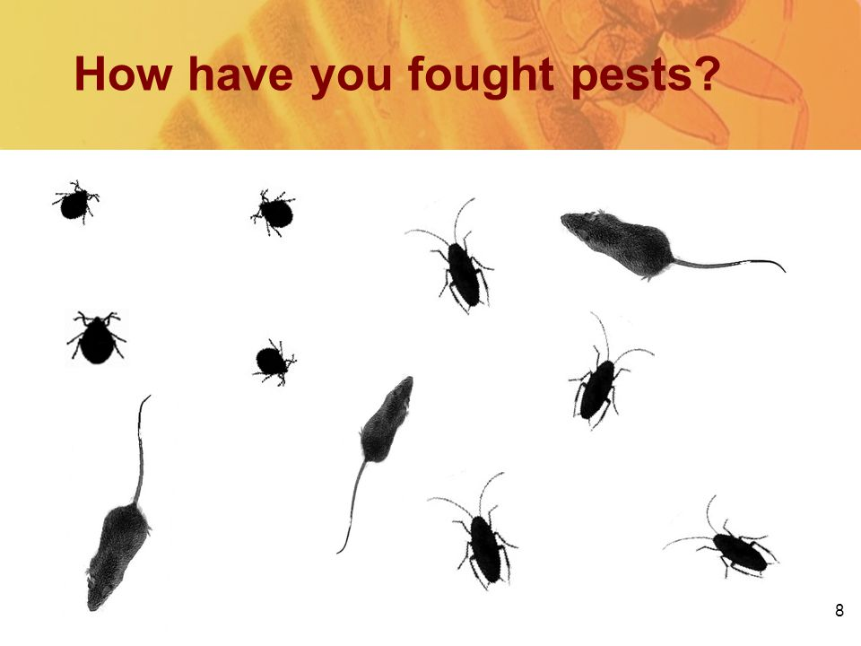 How have you fought pests