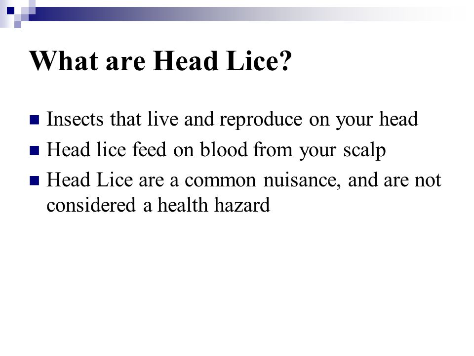 What are Head Lice Insects that live and reproduce on your head