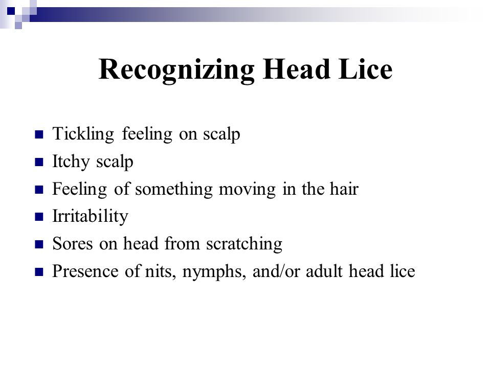 Recognizing Head Lice Tickling feeling on scalp Itchy scalp