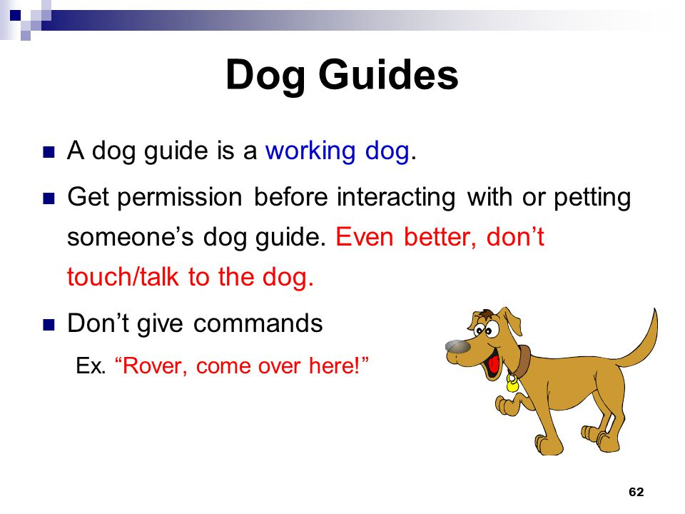 Dog Guides A dog guide is a working dog.