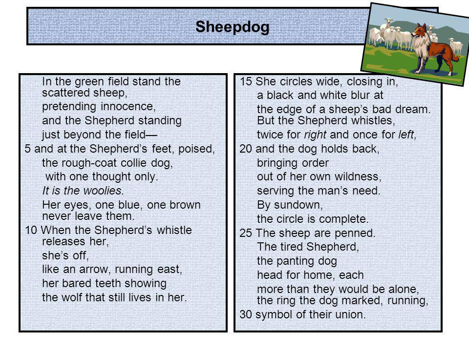 Sheepdog In the green field stand the scattered sheep,