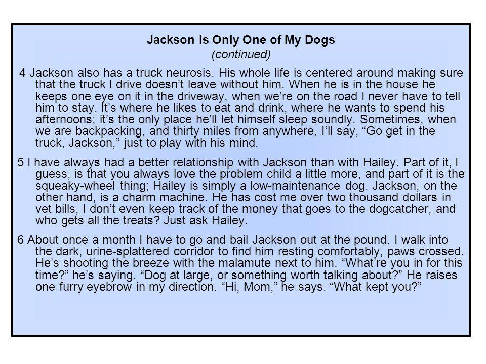 Jackson Is Only One of My Dogs
