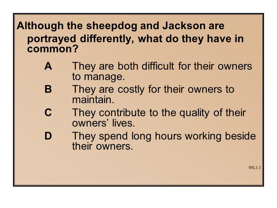 Although the sheepdog and Jackson are
