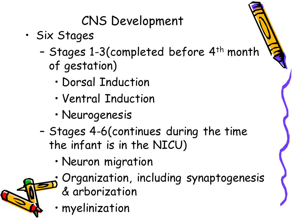CNS Development Six Stages