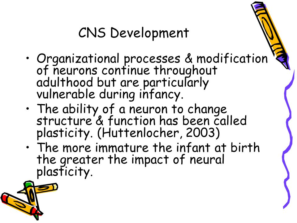 CNS Development Organizational processes & modification of neurons continue throughout adulthood but are particularly vulnerable during infancy.