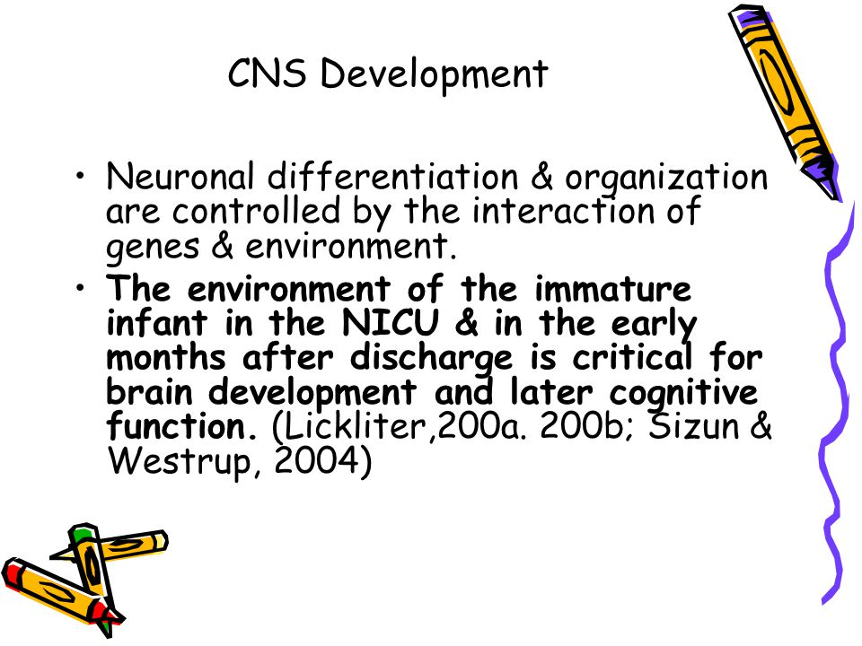 CNS Development Neuronal differentiation & organization are controlled by the interaction of genes & environment.