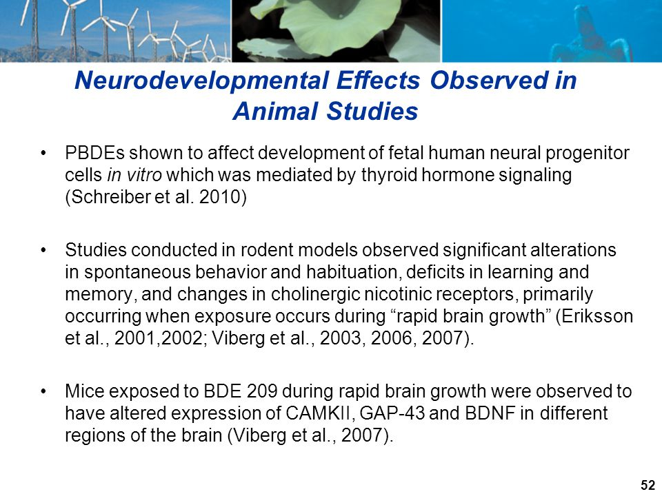 Neurodevelopmental Effects Observed in Animal Studies