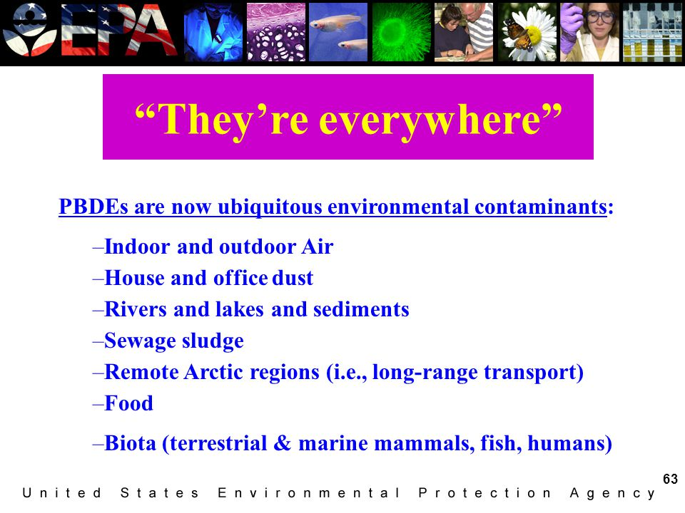 They're everywhere PBDEs are now ubiquitous environmental contaminants: Indoor and outdoor Air. House and office dust.