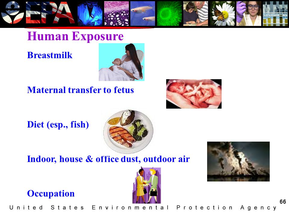 Human Exposure Breastmilk Maternal transfer to fetus Diet (esp., fish)