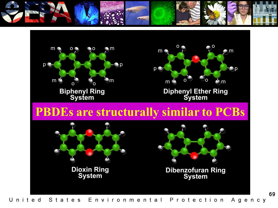 PBDEs are structurally similar to PCBs