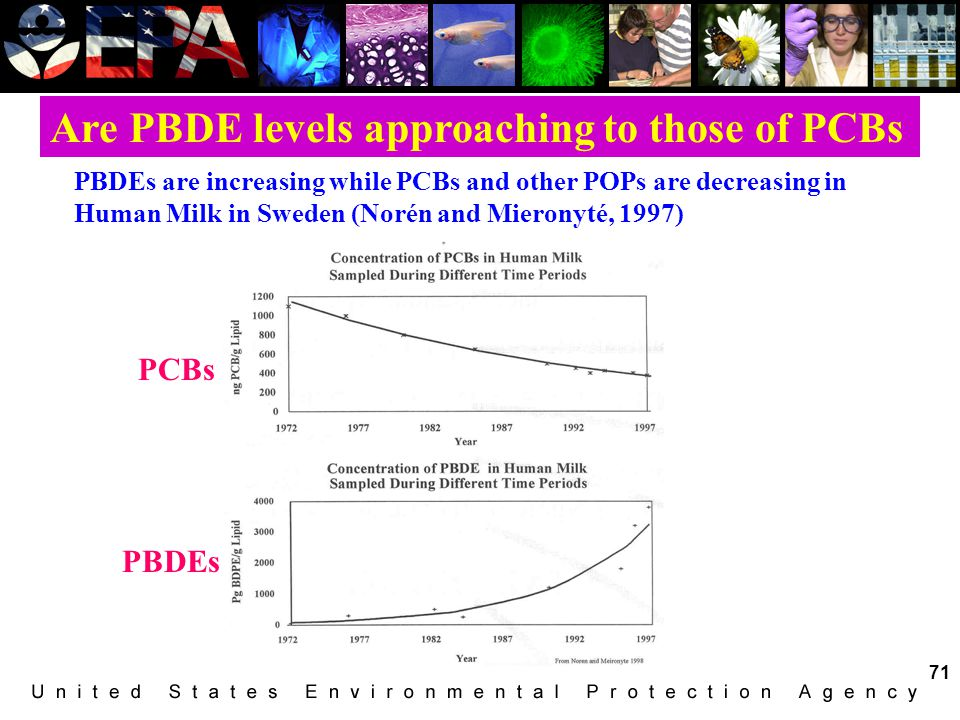 Are PBDE levels approaching to those of PCBs