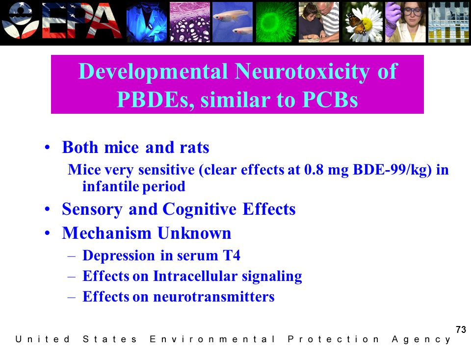 Developmental Neurotoxicity of PBDEs, similar to PCBs