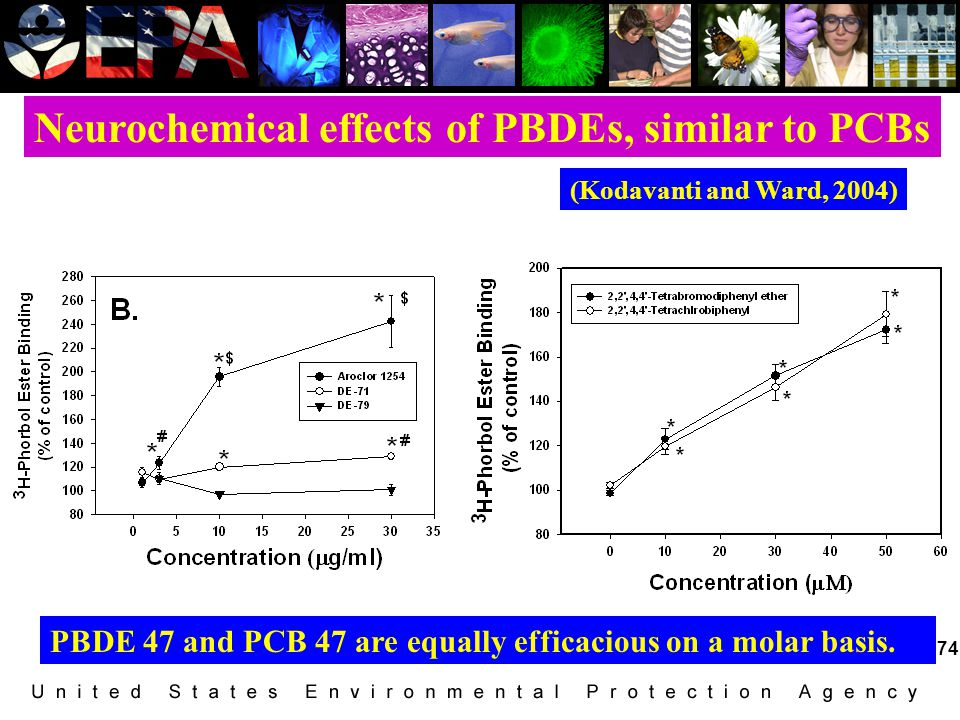 Neurochemical effects of PBDEs, similar to PCBs