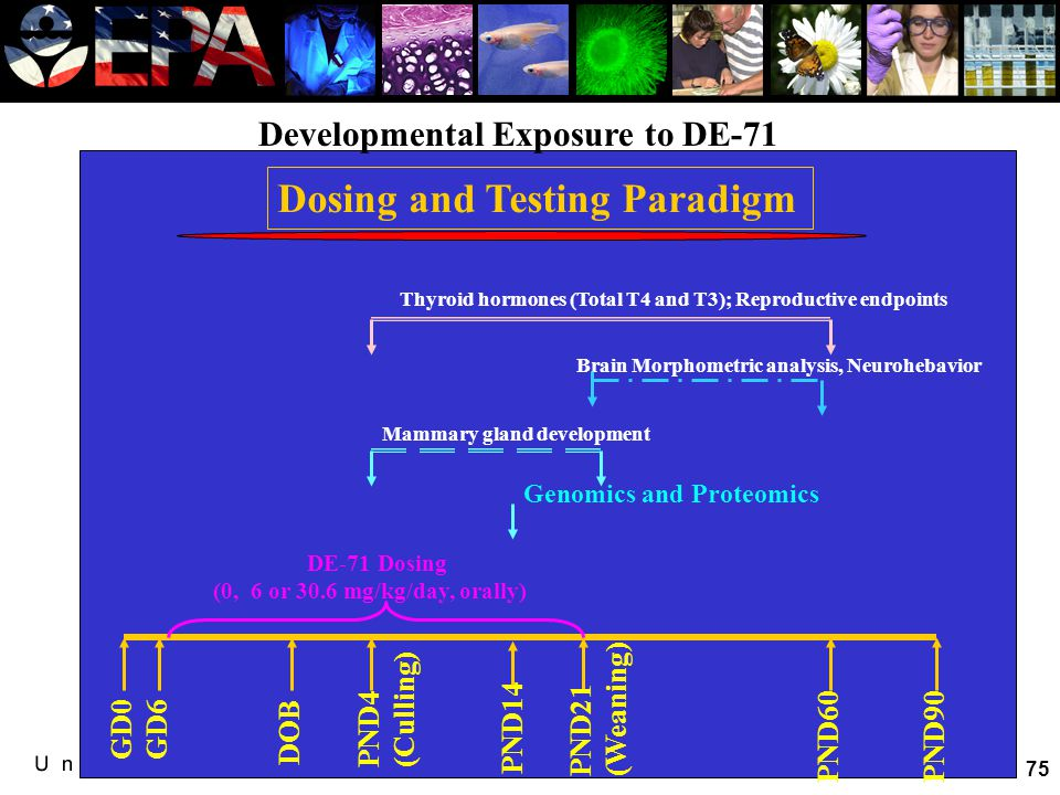 Developmental exposure to DE-71