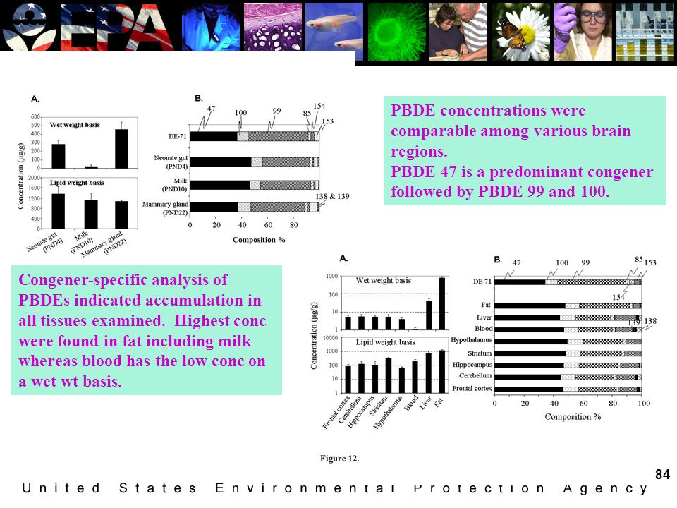 PBDE concentrations were comparable among various brain regions.