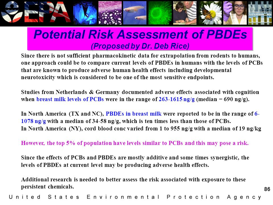 Potential Risk Assessment of PBDEs (Proposed by Dr. Deb Rice)