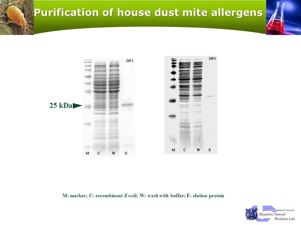 Purification of house dust mite allergens