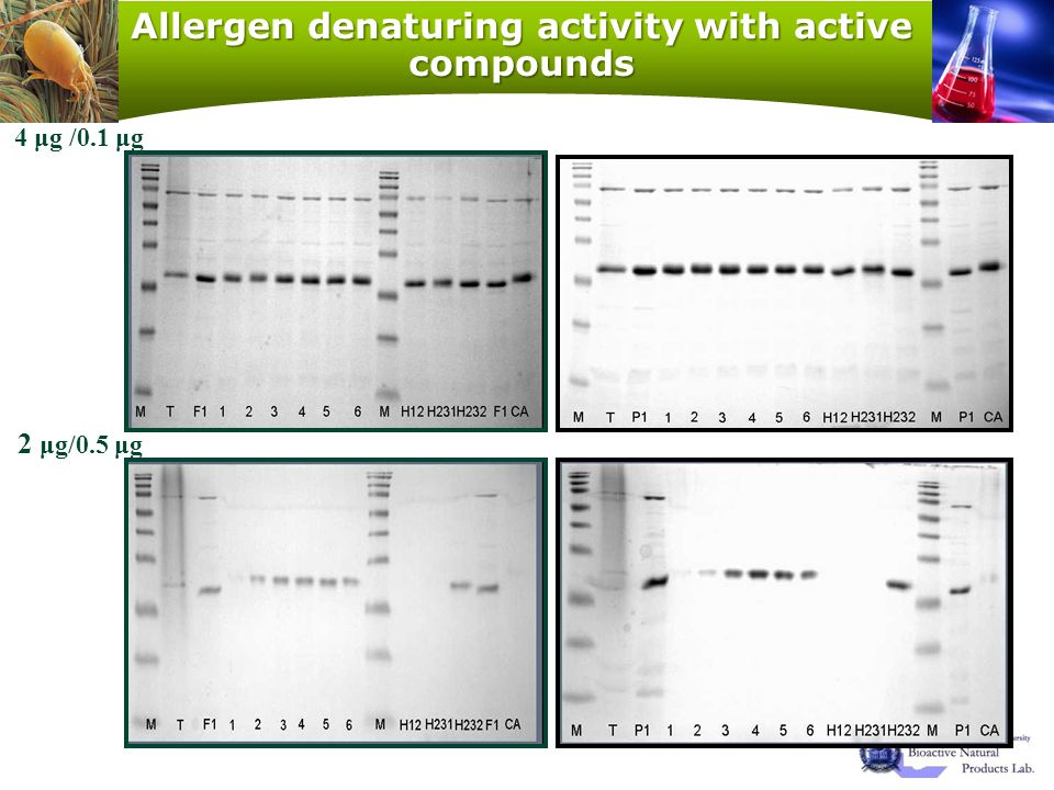 Allergen denaturing activity with active compounds