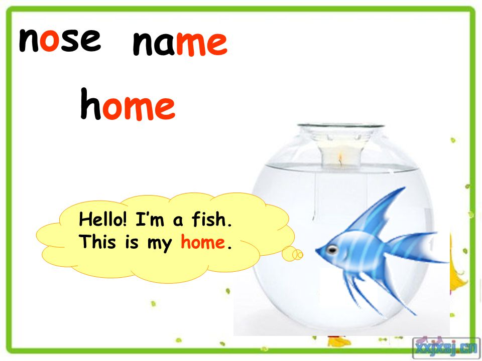 nose name home Hello! I'm a fish. This is my home.